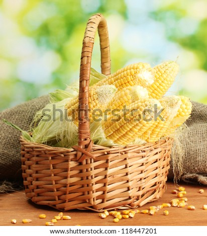 fresh corn in basket, on wooden table, on green background