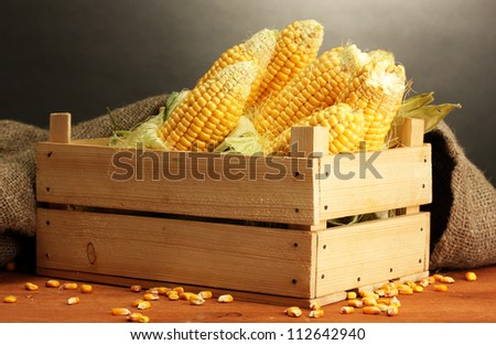 fresh corn in box, on wooden table, on grey background