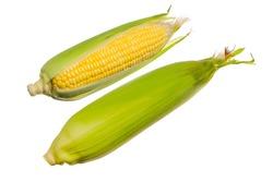 Fresh corn isolated on white background.