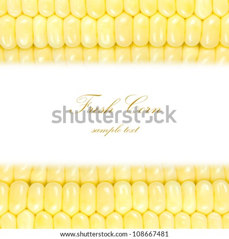 Fresh corn isolated on white. Frame design element with copy space