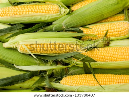 Fresh corn on cob