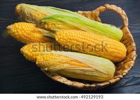 Fresh corn on the cob in wicker basket on brown wooden table. Untreated corn cobs.