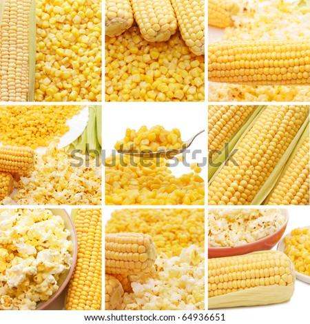 Fresh corn, preserved corn and popcorn collage