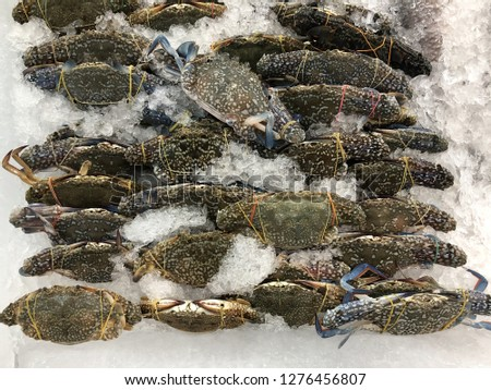 fresh crabs covered with a thick exoskeleton and a single pair of claws. raw fresh blue swimming crabs or flower crabs in seafood fresh market in full frame.