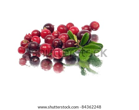 fresh cranberries on a white background with water drops