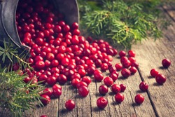fresh cranberry (cowberry) on wooden background, selective focus, toned