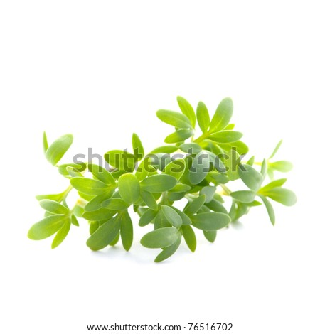fresh cress isolated on white background