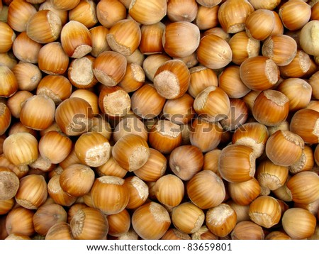 fresh cropped filberts as food background