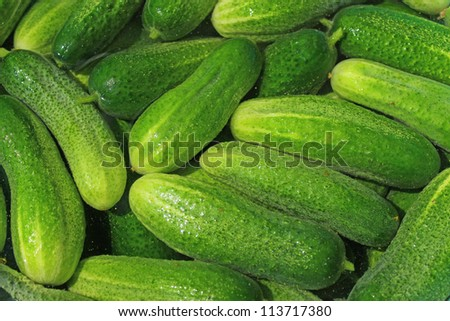 Fresh cucumbers before pickling