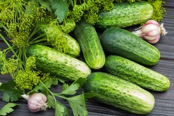 Fresh cucumbers. Dill sprigs with seeds and head of garlic. Close up. Wooden background. Top view.