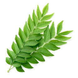 fresh curry leaves isolated on white background, top view