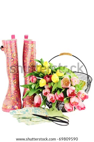 Fresh cut tulips with galoshes, gardening gloves and sheers isolated on a white background with copyspace available.