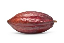 Fresh Dark red cocoa fruit isolated on white background. Clipping path