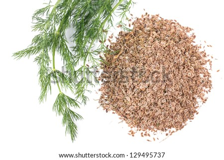 fresh dill and dry on a white background