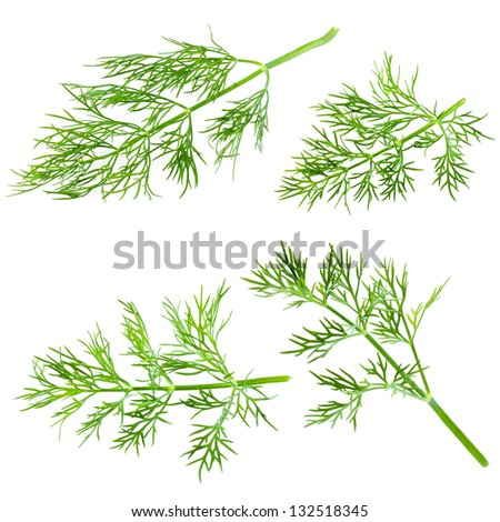 Fresh dill isolated on white background