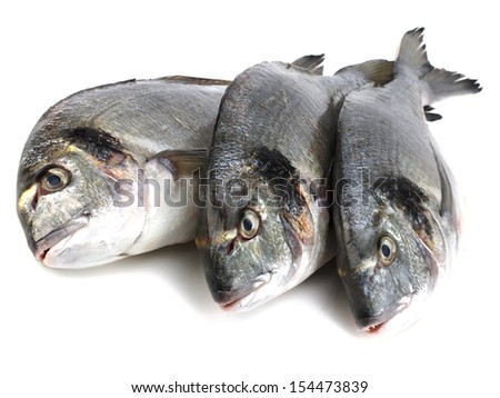 Fresh Dorado fish on a white background