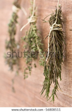 Fresh dried herb bundles of different herbs hanging on the wall - stock photo