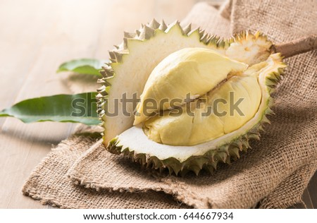 fresh durian on sack, king of fruit in thailand