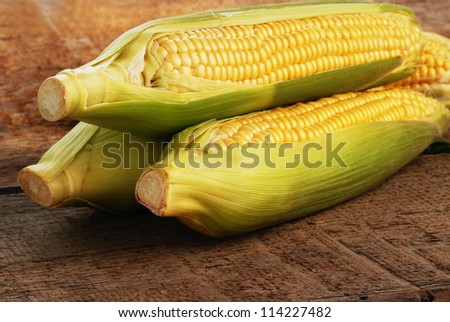 Fresh ear of corn with green leaves isolated
