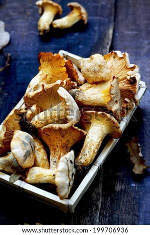 Fresh edible mushrooms #199706936