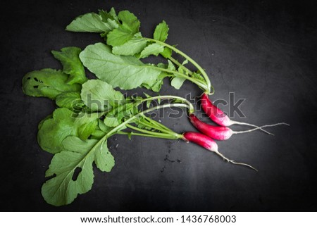 Fresh elongated radish on a dark gray background. The concept of healthy eating, healthy eating, growing vegetables, early harvest. Flat lay, minimalism, top view. Just from the garden.