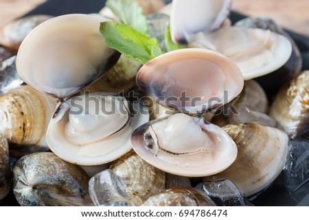 Fresh enamel venus shell (Meretrix lyrata) Meretrix is a genus of edible saltwater clams, marine bivalve molluscs in the family Veneridae, the Venus clams. Stockfoto ©