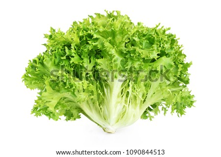 Fresh endive lettuce isolated on white background. With clipping path.