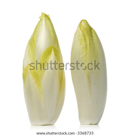 fresh endives over white background