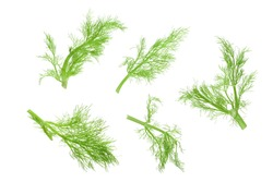 Fresh fennel branch isolated on white background. Top view. Flat lay
