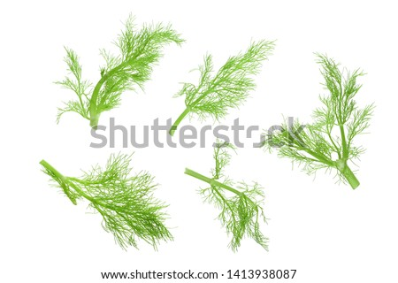 Fresh fennel branch isolated on white background. Top view. Flat lay Foto stock ©