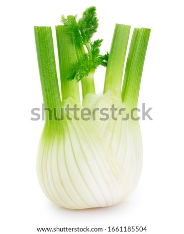 fresh fennel bulb isolated on white background