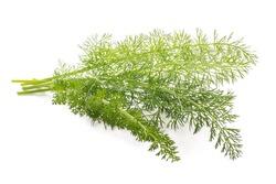 Fresh  fennel  isolated on white background