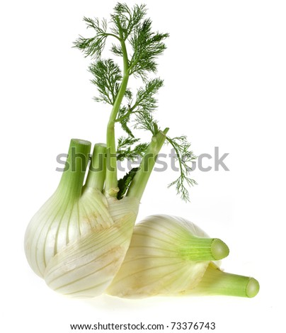 fresh fennel  isolated over white background