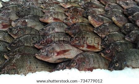 Fresh Fish #734779012