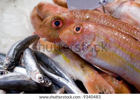 Fresh fish11