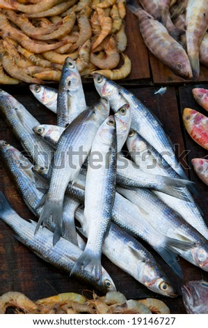 http://image.shutterstock.com/display_pic_with_logo/53547/53547,1224393965,1/stock-photo-fresh-fish-at-a-fish-market-19146727.jpg