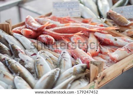 Fresh fish at fish market