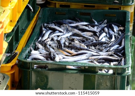 Fresh fish at the port of KRK in the early morning