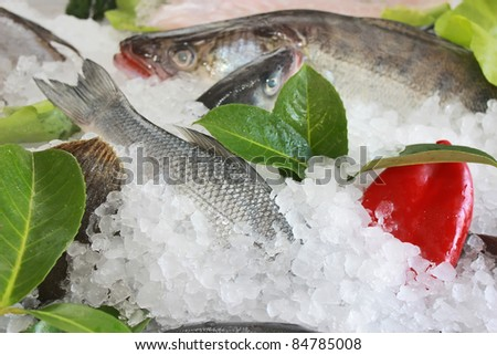 fresh fish decorated in the ice