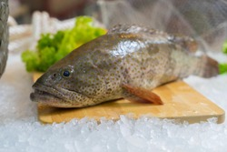 Fresh fish hamour Sea food  high quality image.