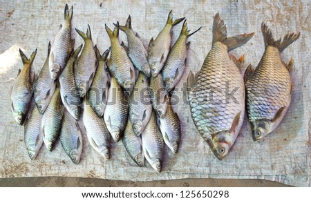 fresh fish in different sizes laying on a table