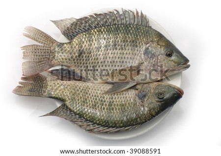 Fresh Fish on a white plate
