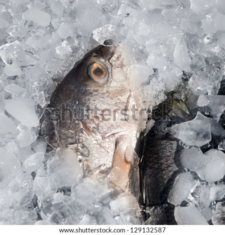 Fresh fish on ice for sale at restaurant