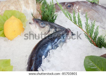 fresh fish on the ice - stock photo