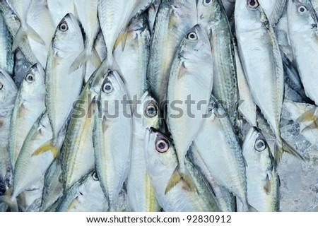 Fresh fishe in a market