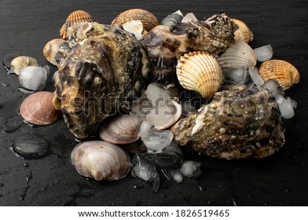Fresh fisherman catch with oysters and mussels on ice. Raw molluscs, shellfish on black background closeup Foto stock ©
