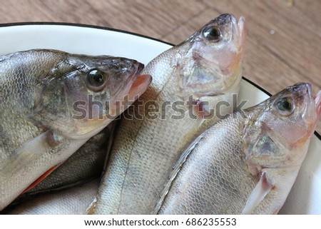 Fresh fishes #686235553