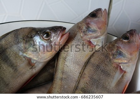 Fresh fishes #686235607