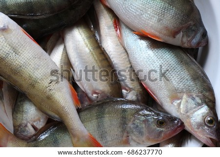 Fresh fishes #686237770