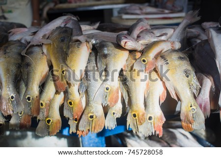 Shutterstock Fresh fishes (tucunare, in portuguese) typical regional food for sale in famous Ver-o-Peso public market in Belem do Para, Brazil. A tourist and cultural center. Exotic cuisine concept